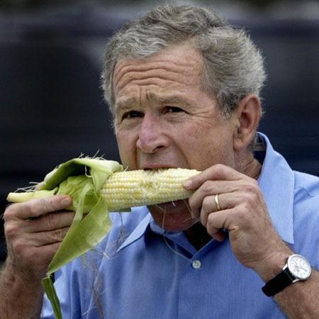 bush_eating-corn_claudiamatarazzo