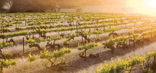 vinhos-australia-0