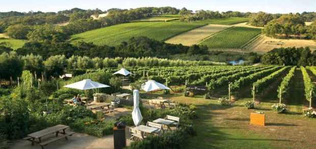 vinhos-australia-1